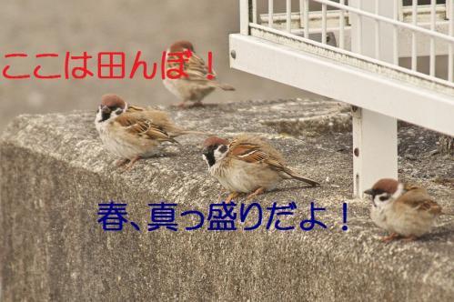 036_20130329213819.jpg