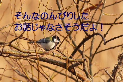 037_20130316193930.jpg