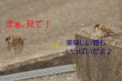 037_20130329213941.jpg