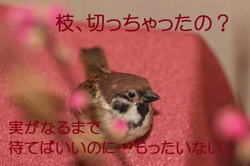 040_20130302042747.jpg