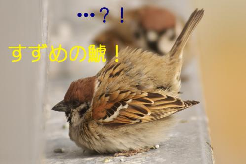 040_20130304213745.jpg
