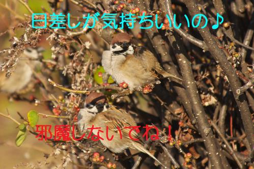 040_20130305204132.jpg