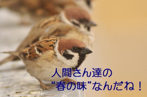 040_20130308225001.jpg