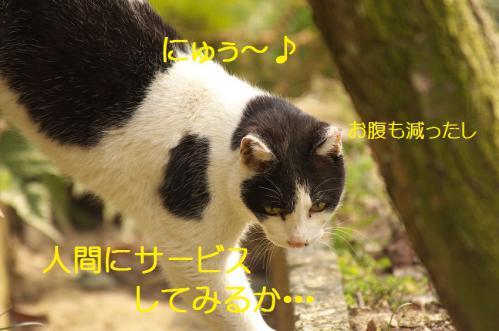 040_20130313214743.jpg
