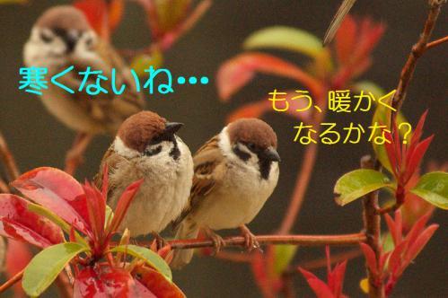040_20130320211019.jpg