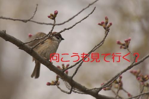 040_20130327205857.jpg