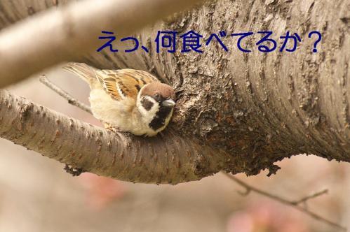040_20130328200800.jpg