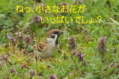 040_20130329213946.jpg