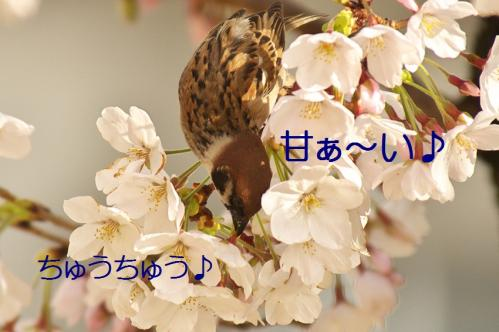 040_20130330214704.jpg