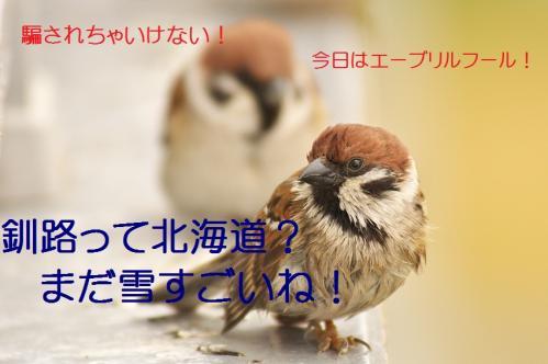 040_20130331170934.jpg