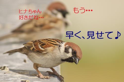 040_20130428194647.jpg