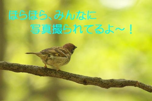 040_20130503222021.jpg