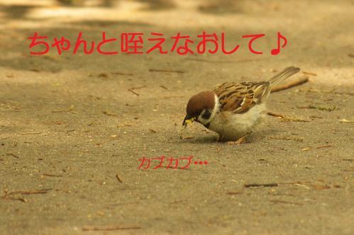 040_20130506201355.jpg