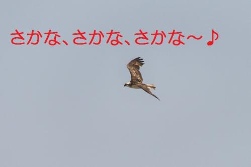 040_20130527215241.jpg