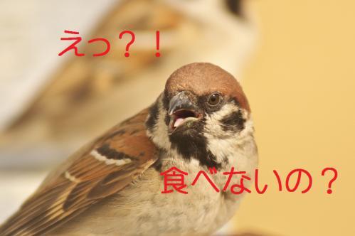 045_20130215211401.jpg