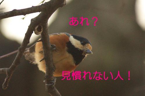 050_20130215211408.jpg