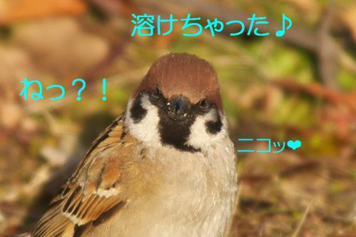 050_20130301215204.jpg