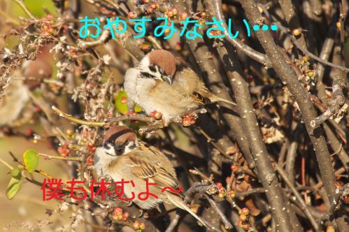 050_20130305204135.jpg