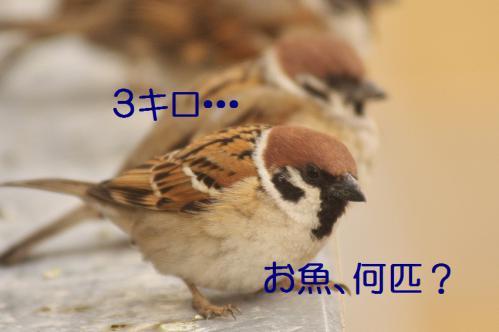 050_20130308225004.jpg