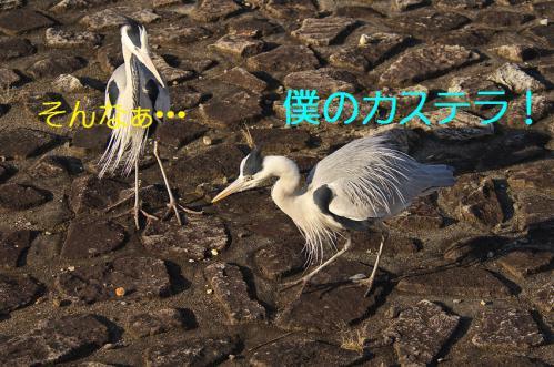 050_20130309223757.jpg