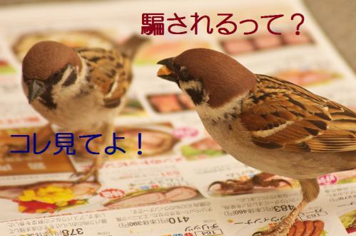 050_20130311210408.jpg