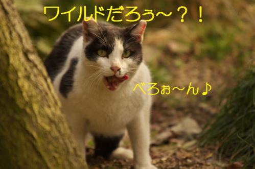 050_20130313215103.jpg