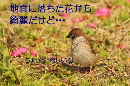 050_20130319203422.jpg