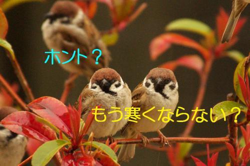 050_20130320211022.jpg