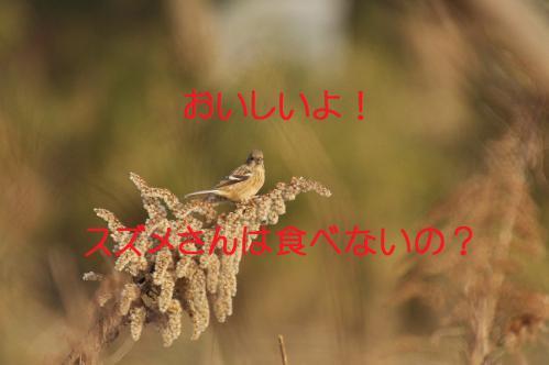 050_20130322213348.jpg