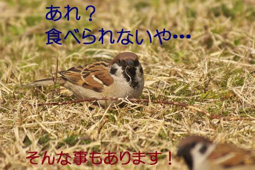 050_20130322224552.jpg