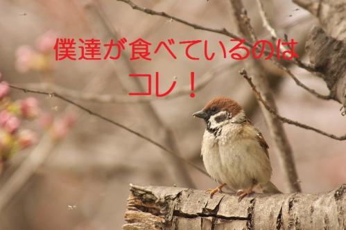 050_20130328200805.jpg