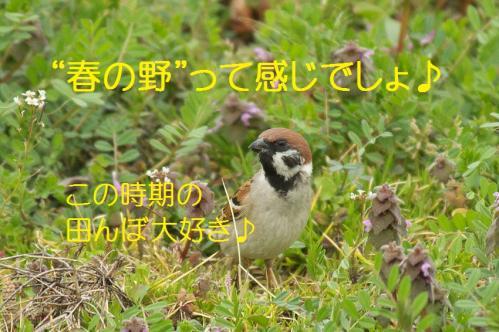 050_20130329213952.jpg