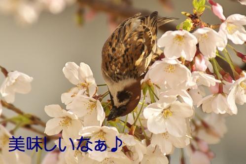 050_20130330214736.jpg