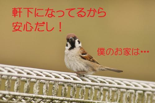 050_20130430194245.jpg