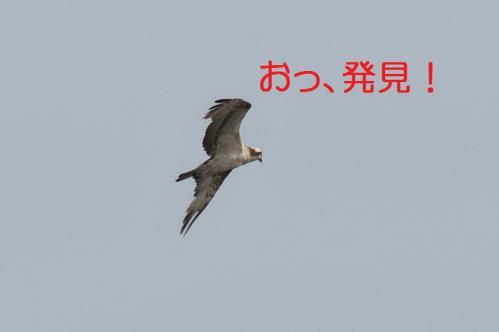 050_20130527215243.jpg