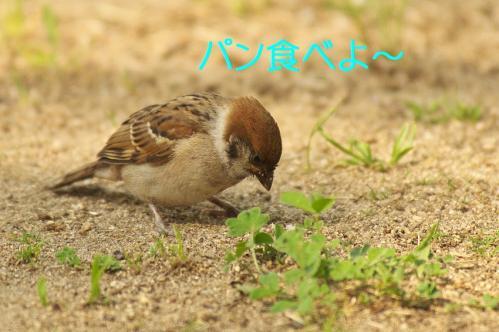 050_20130528185024.jpg