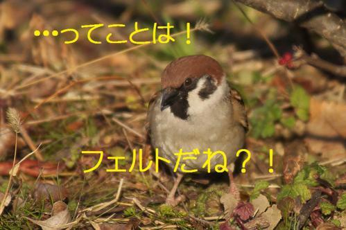 060_20130301215303.jpg