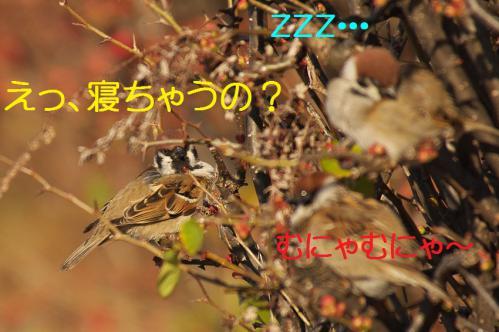 060_20130305204251.jpg