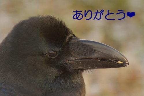 060_20130307204521.jpg
