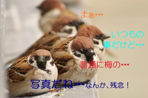 060_20130312194625.jpg