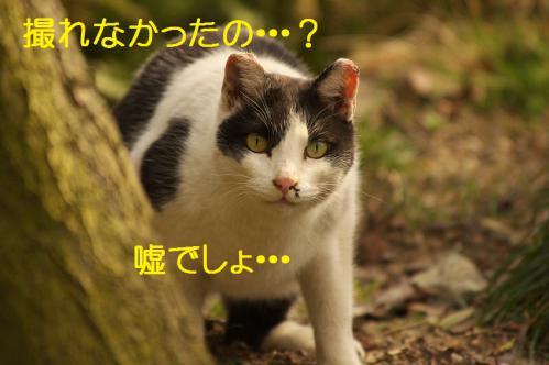 060_20130313215106.jpg