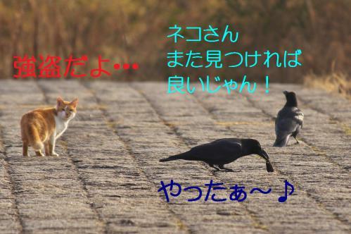 060_20130316193937.jpg