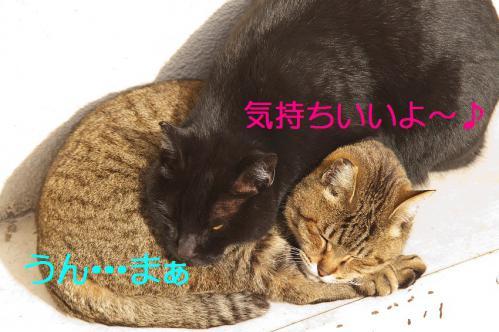060_20130318215553.jpg