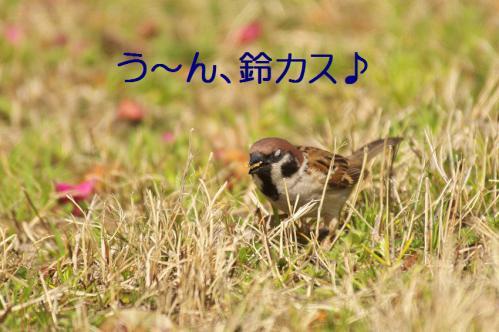 060_20130319203551.jpg