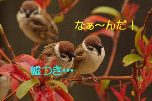 060_20130320211123.jpg