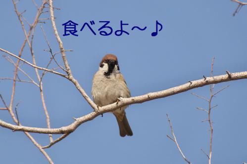 060_20130322213430.jpg