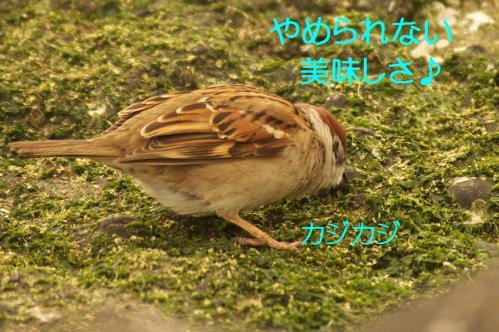 060_20130322231244.jpg