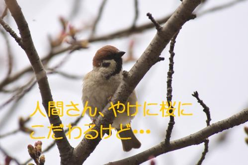 060_20130327210136.jpg