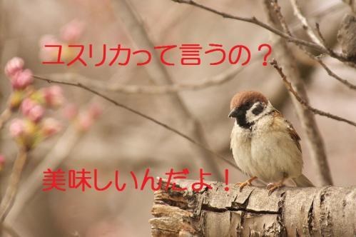 060_20130328200841.jpg