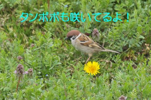 060_20130329213958.jpg
